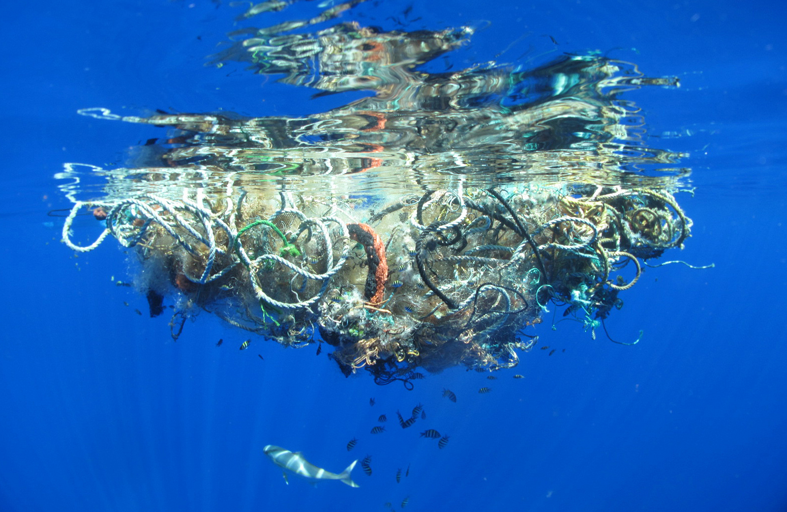Plastikmüll im Pazifik.