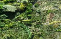 Auf dem Foto ist eine Wand zu sehen, an der viele Pflanzen wachsen.
