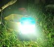 SALt Salzwasserlampe