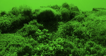 Auf dem Foto ist eine Wand zu sehen, auf der Pflanzen wachsen. Das Foto ist grün eingefärbt.